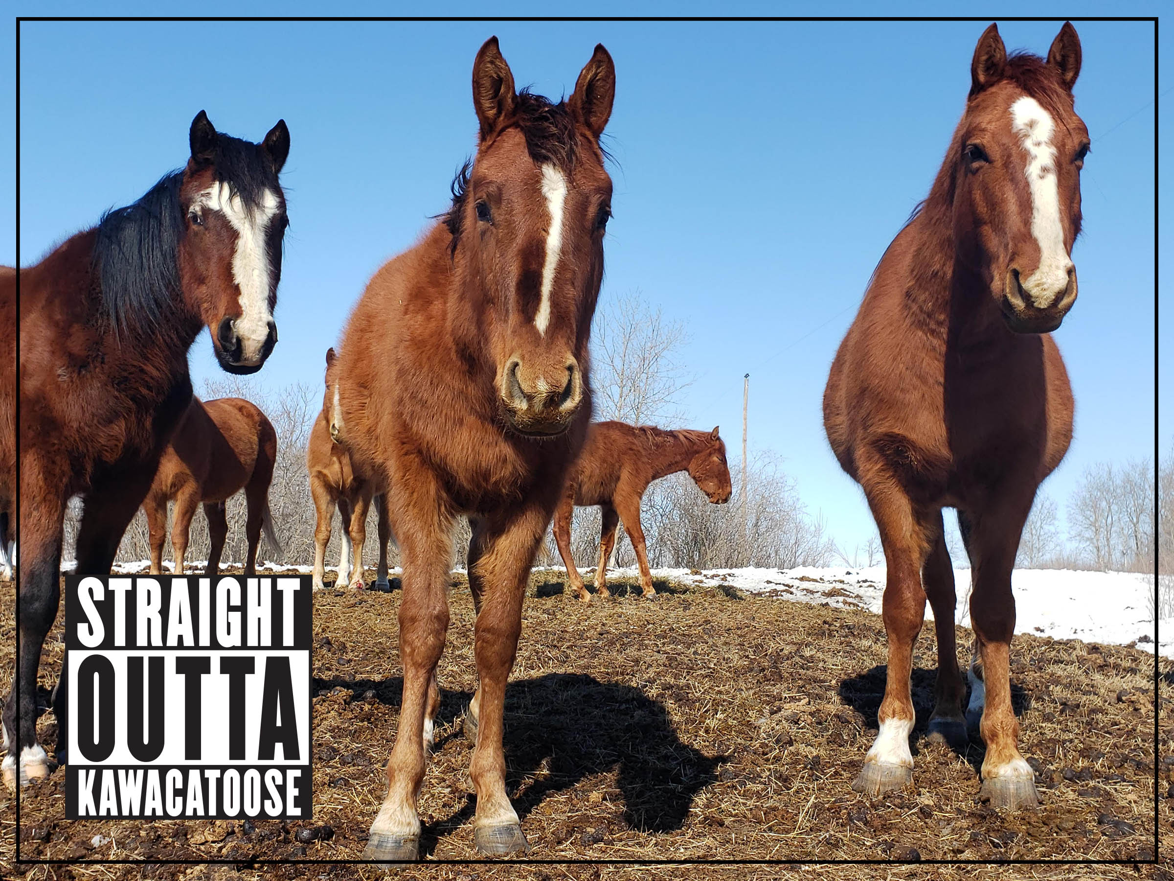 straight outta kawacatoose - horse cover photo